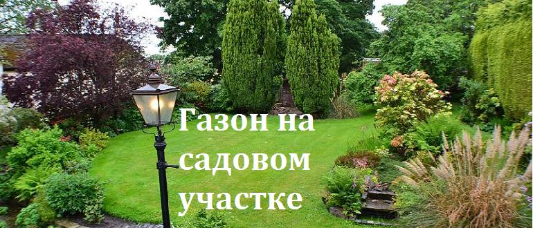 Как создать газон на садовом участке